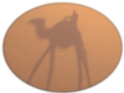 CamelShadow